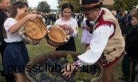 На Мукачівщині приготували основу для вина з винограду 39-ти сільрад